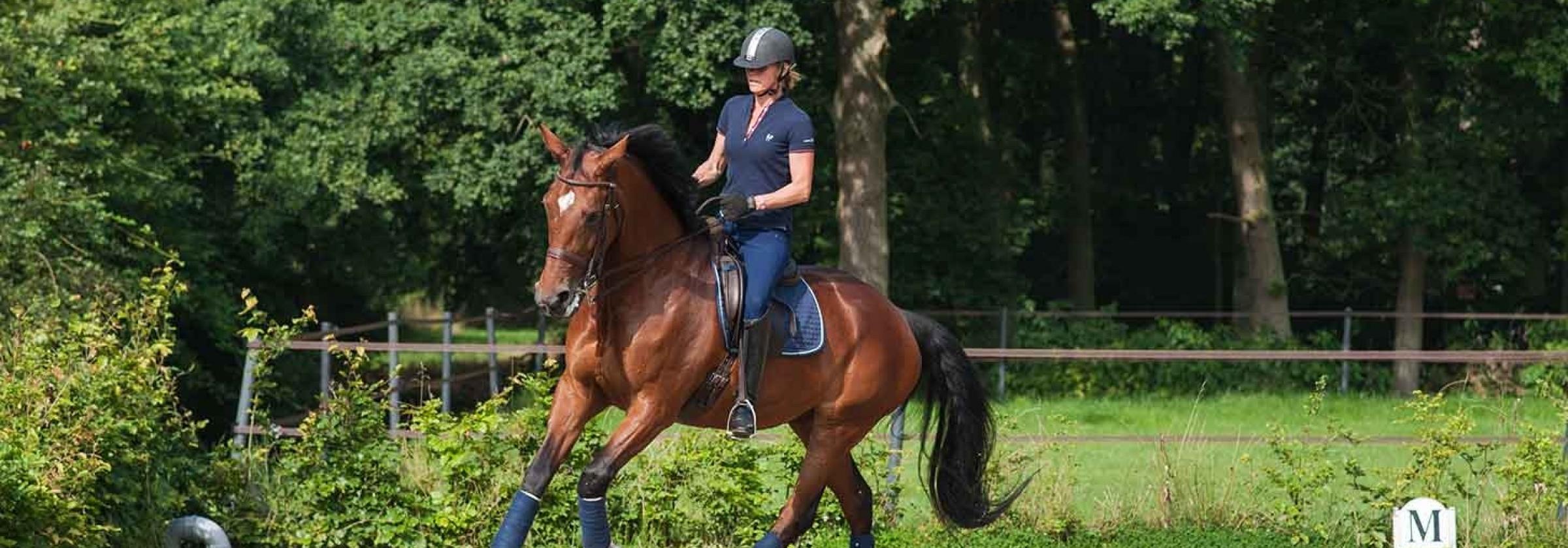 paard_1